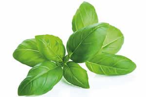 Hierbas y aromáticas orgánicas